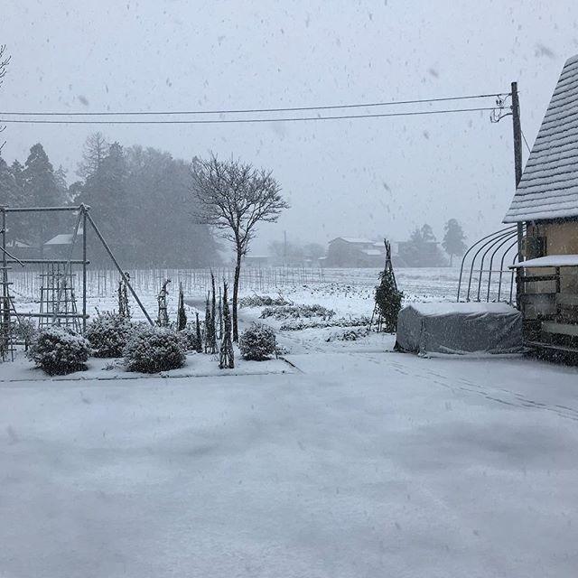どんどん積もってる!#雪 #冬将軍 #秋田県 #大仙市