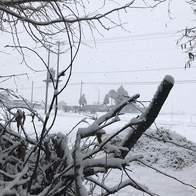今日は吹雪(≧∀≦)大荒れの秋田県大仙市です。#雪 #吹雪 #大雪 #秋田 #大仙市