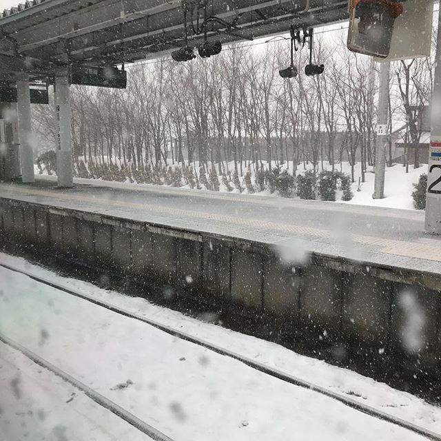 猛吹雪で秋田新幹線が遅れています!