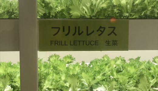 銀座の野菜工場