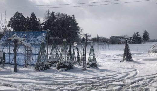 久しぶりの積雪